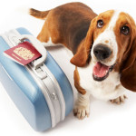Making Travel with Pets Easier