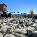 Celebrating The Western Heritage Of the Sheep Rancher