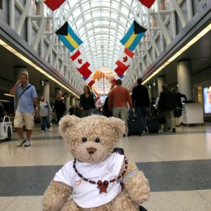 The Bears That Travel For An Education