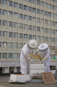 1. Lancaster London Bees 2 IMAGE MUST BE CREDITED TO RICHARD TWILTON