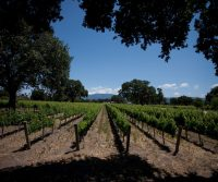 Wine Month In California