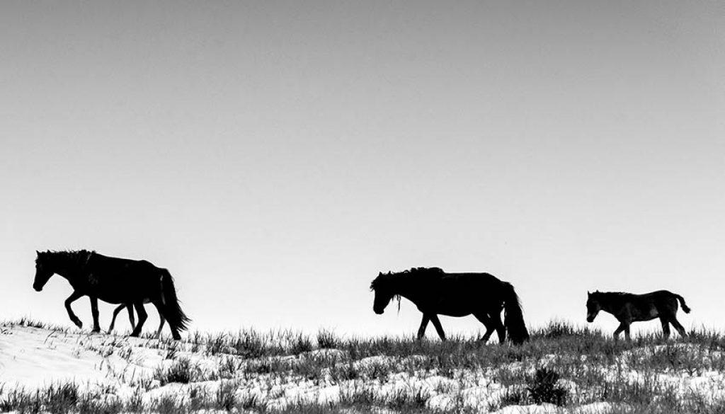 horses on prairie