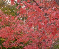 Fall Comes To California Ablaze With Color