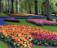 River Cruises -- Tulip Time In The Netherlands, Day Two