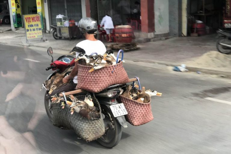 vietnam duck transport