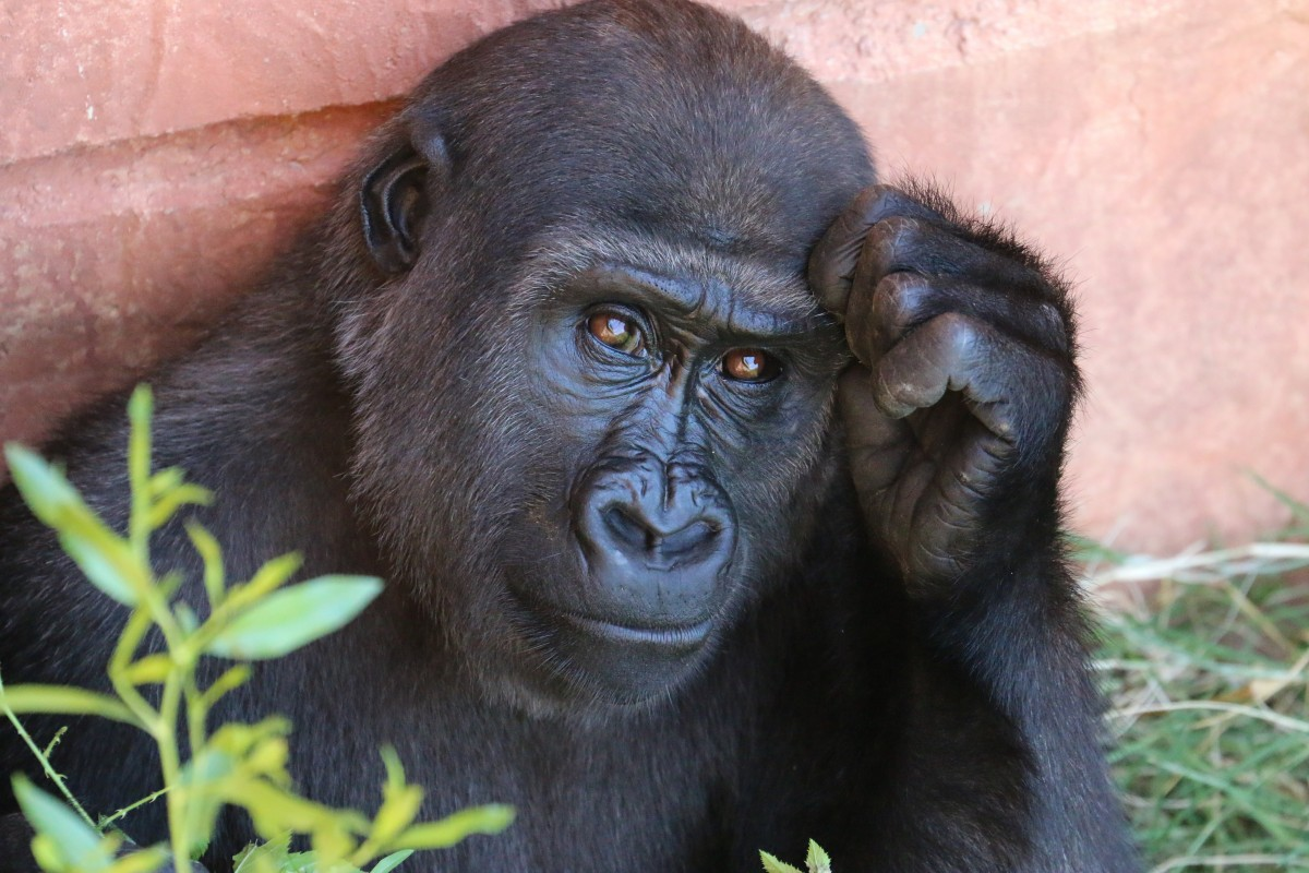 People --David DeVoss Finds Good Government, A Flourishing Economy And Gorillas In Rwanda