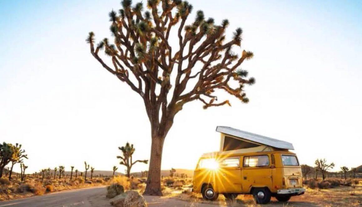 1 vanlife tree