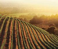 California Wine Month Goes Virtual
