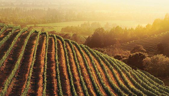 newton vineyard winemonth