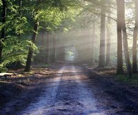 Into the Forest: Back to Nature Travel, Part 3